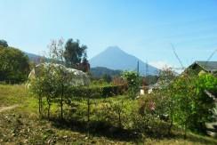 Finca de cultivo de aguacates en Santa Lucia Milpas Altas